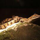 Baby Crocs by wahboasti