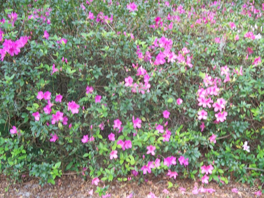Purple Flower Bush by karen66
