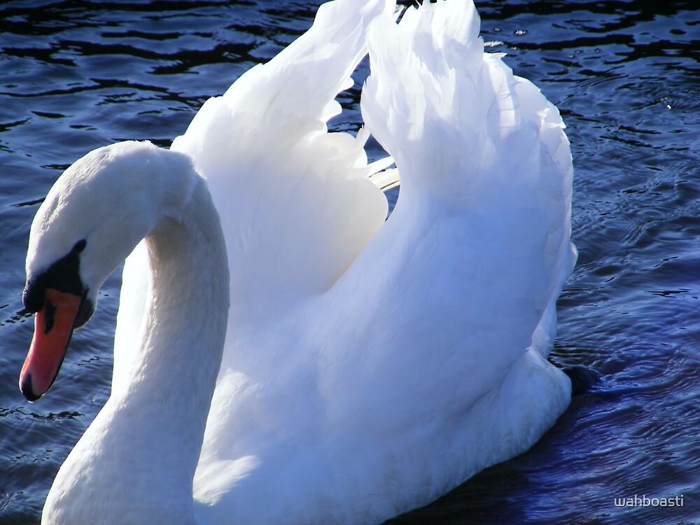 Mute Swan by wahboasti