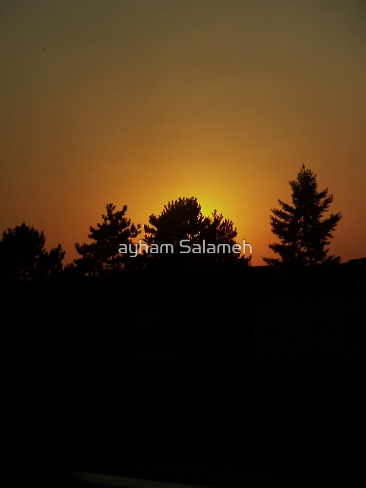 Summer Trees  by ayham Salameh