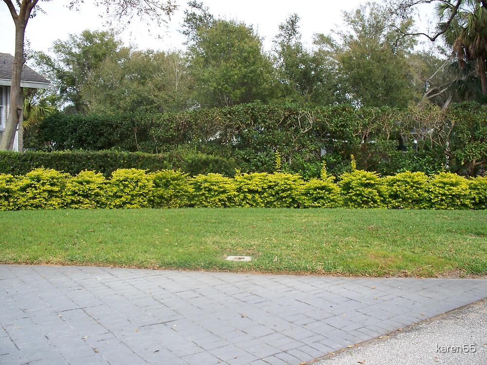Yellow Bushes by karen66