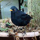Garden Visitor by trish725