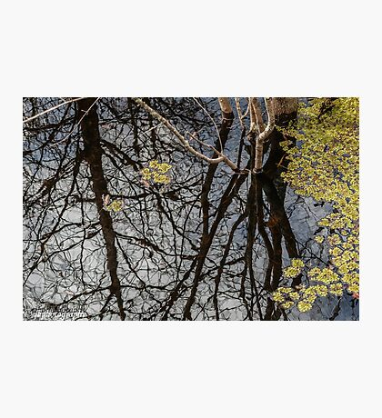 Reflections at Six Mile Cypress Photographic Print