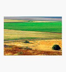 Wheat field, Negev desert, Israel Photographic Print