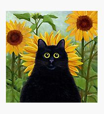 Dan de Lion with Sunflowers Photographic Print