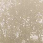 DOGWOOD TREE by Alessandro Nesci