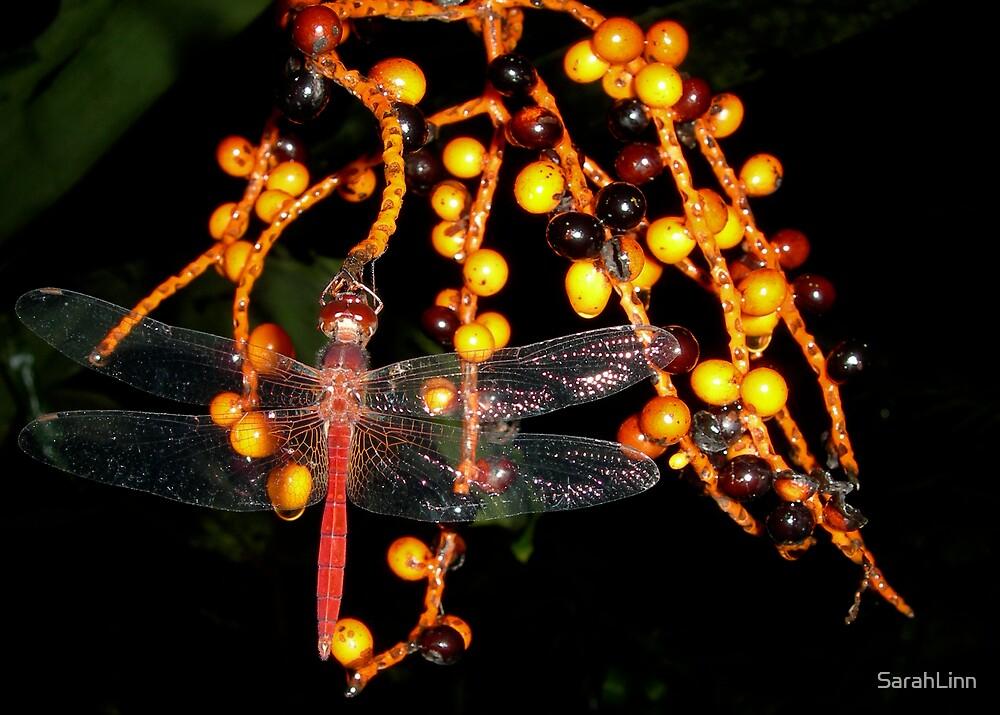 Dragonfly by SarahLinn