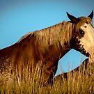 Wild Horses Of North Dakota by Tina Hailey