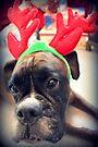 Es ist diese Zeit des Jahres wieder ... Bah Humbug ... - Boxer Dogs Series von Evita