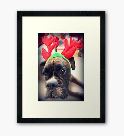 Es ist diese Zeit des Jahres wieder ... Bah Humbug ... - Boxer Dogs Series Gerahmter Kunstdruck