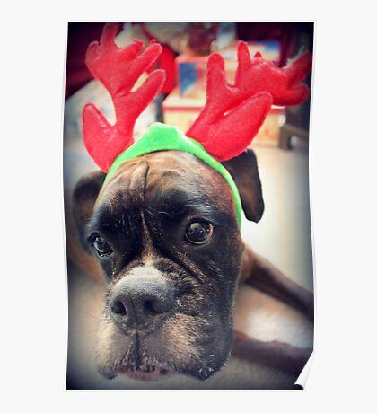 Es ist diese Zeit des Jahres wieder ... Bah Humbug ... - Boxer Dogs Series Poster