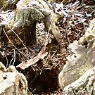Rotting Tree Stump by Shulie1