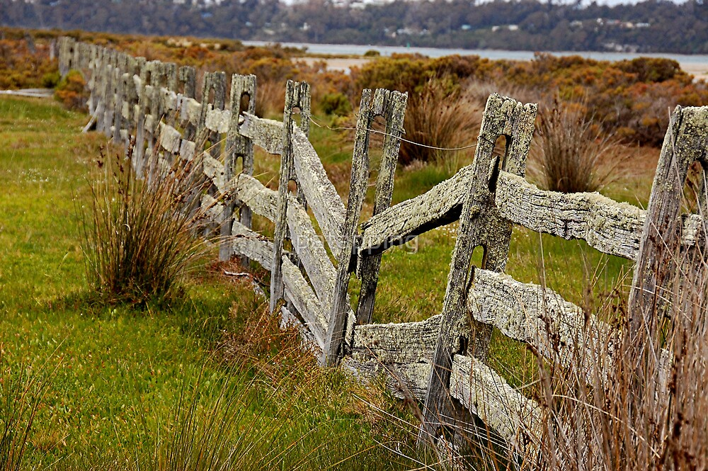 Crooked Fence, Tasmania by patapping