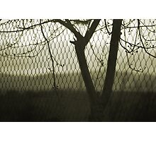 Photographic Print
