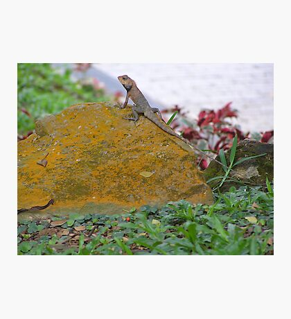 Lounging Lizard Photographic Print
