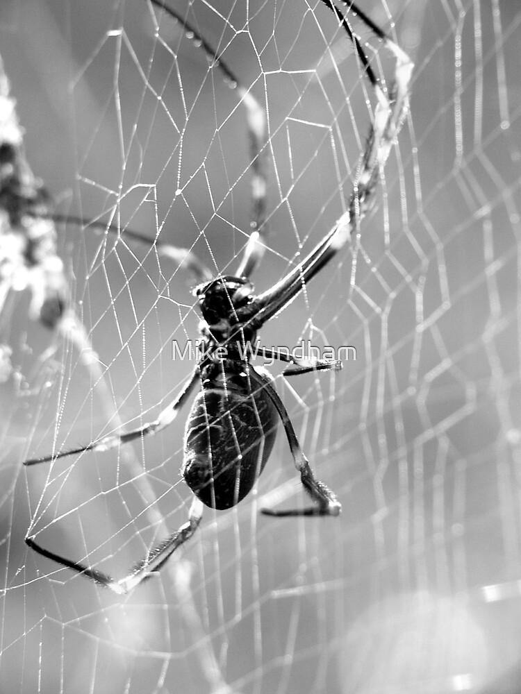 Orb Spider by Mike Wyndham