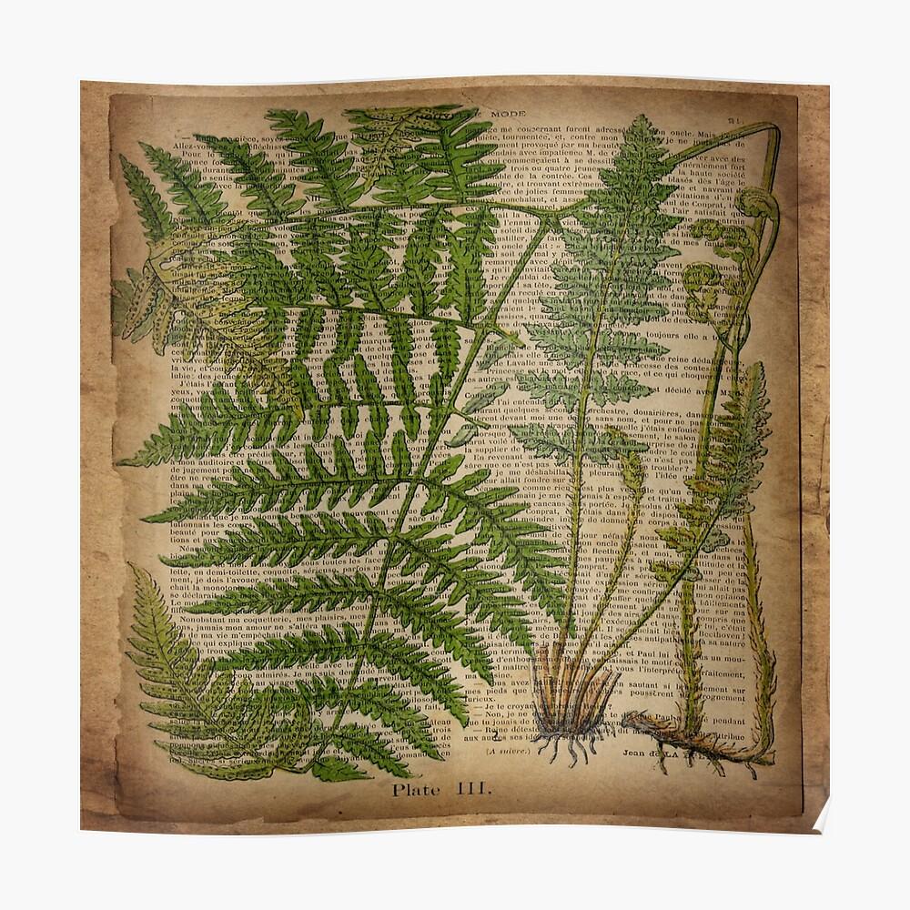 vintage foliage hipster botanical print fern leaves Poster