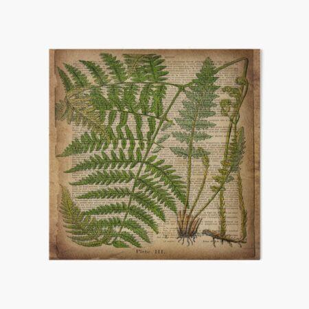 vintage foliage hipster botanical print fern leaves Art Board Print