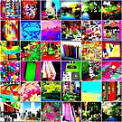 color collage by ShellyKay