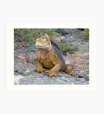 Galapagos Land Iguana Art Print