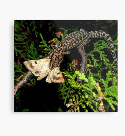 Gecko Kill Metal Print