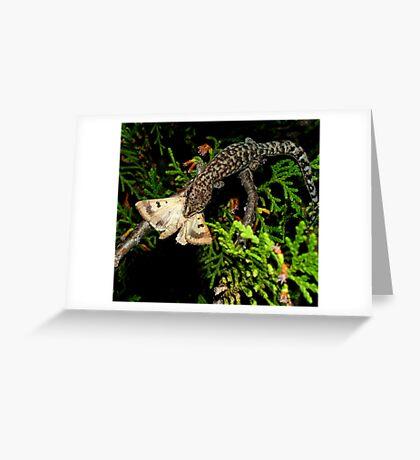 Gecko Kill Greeting Card