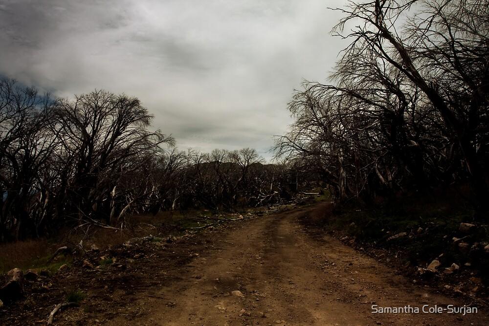 No#3 Track, Mt Stirling by Samantha Cole-Surjan