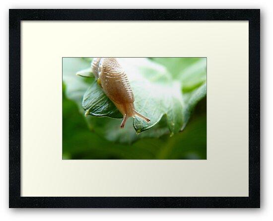The Alien Has Landed! - Slug! - NZ by AndreaEL