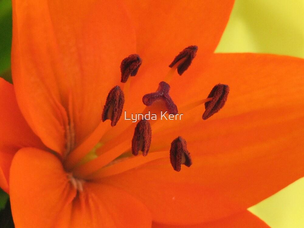 Orange Outburst by Lynda Kerr