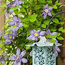 Clematis by Tracy Riddell