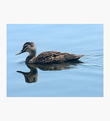 Double Duck Photographic Print