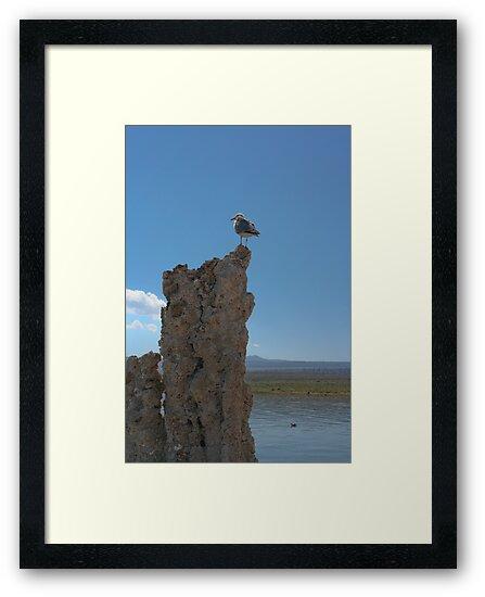 Mono Gull by Chris Clarke