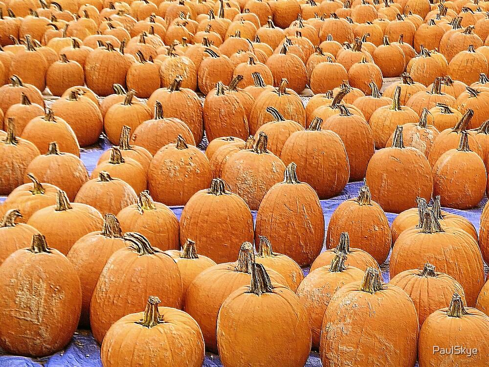 pumpkins by PaulSkye
