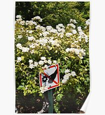 don't touch the flowers Poster