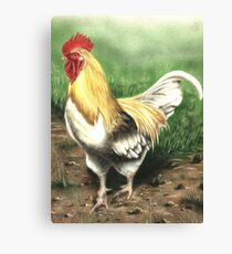 Farmyard Cockrel Canvas Print