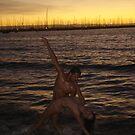 Ocean Dance as Night Falls - Shooters Gallery by Anthea  Slade