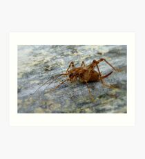 Jumping Jack - Weta - New Zealand Art Print