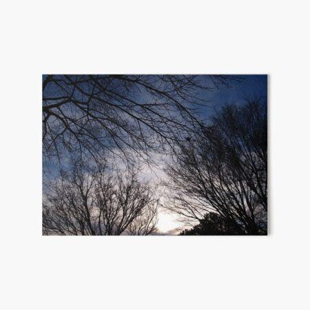 Silent Trees Art Board Print