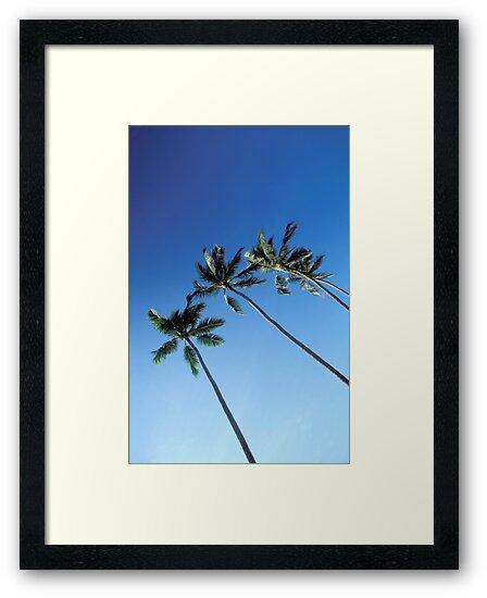 Palm Trees by Richard Heyes