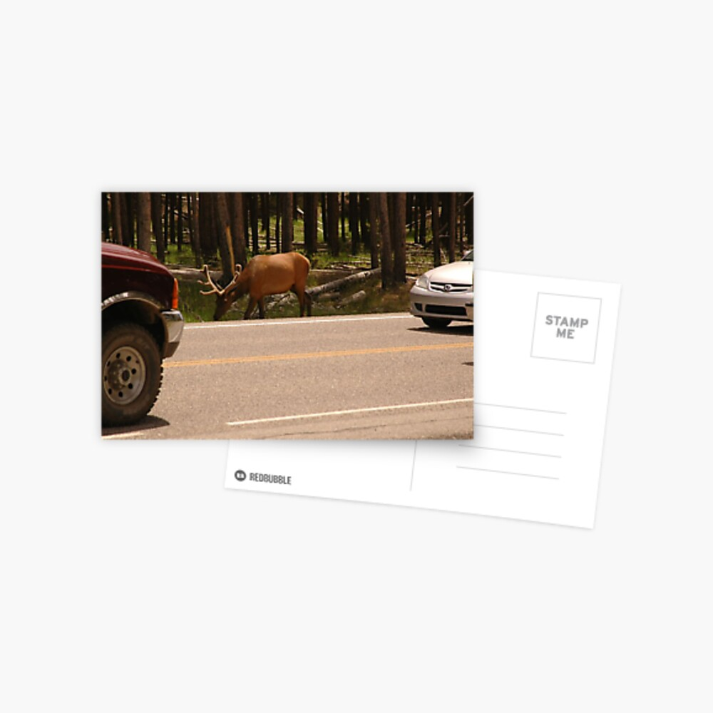 Wildtiere, die mit Nationalpark-Verkehr konkurrieren Postkarte