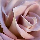 Porzellan Blütenblätter von Celeste Mookherjee