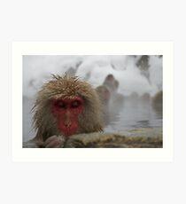 Japanese Snow Monkey Art Print