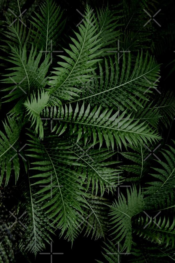 Tropische Blätter 02 von VanGalt