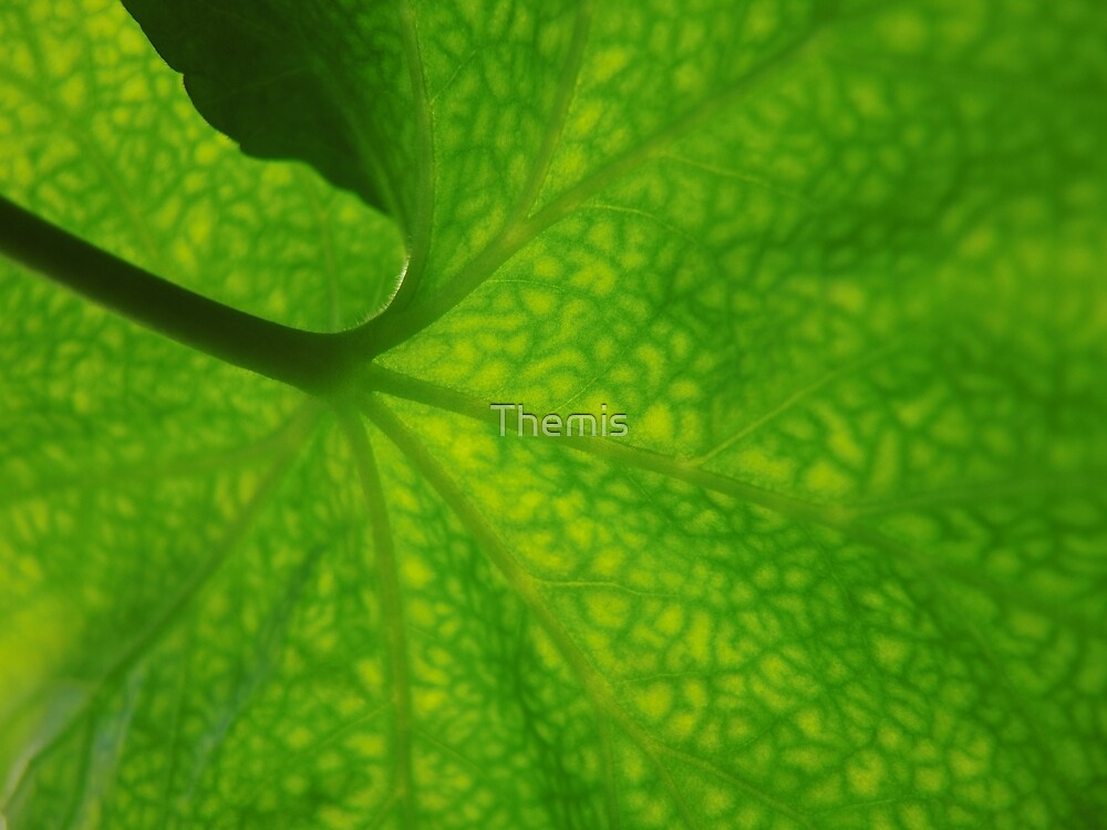 All green by Themis