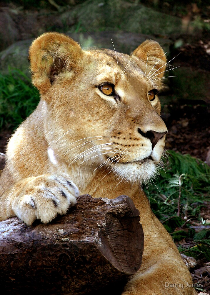 Queen of the Jungle by Danny James