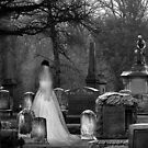 The Widow by Jamie Lee