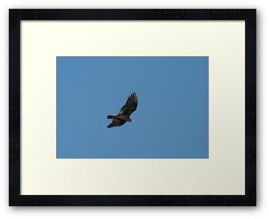 Vulture by Chris Clarke
