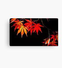 Japanese Maple - Autumn Colour Canvas Print