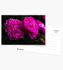 Peonies Postcards