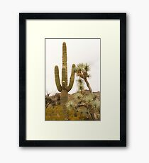 Along Alamo Road, AZ Framed Print